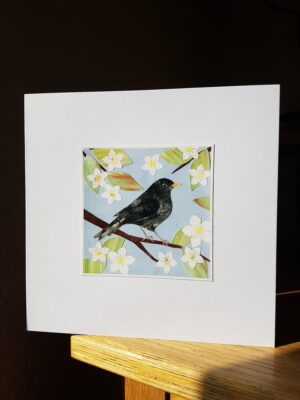 Greeting Card : Blackbird and Blossom